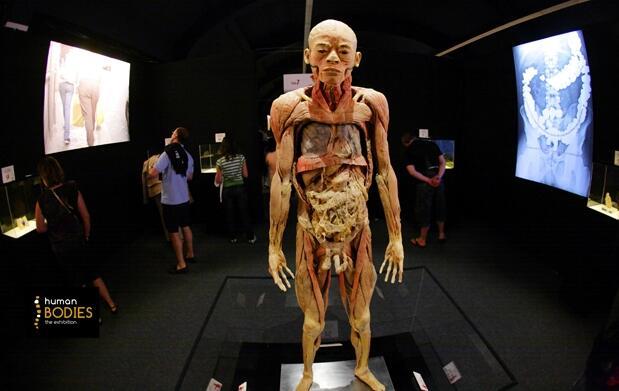 Human Bodies: la exposición de tu vida.