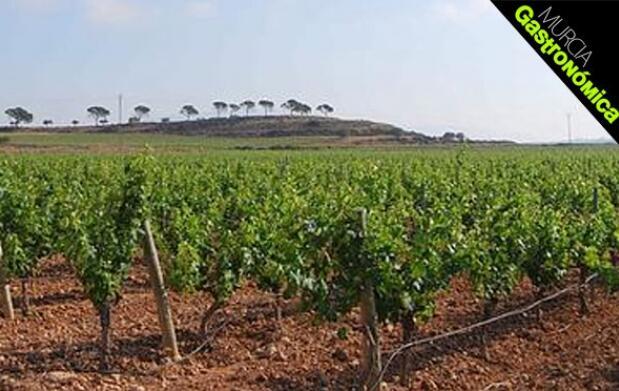 Cata de vinos 'El Sequé' por Blas Cerón