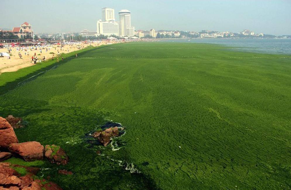Playa verde en China