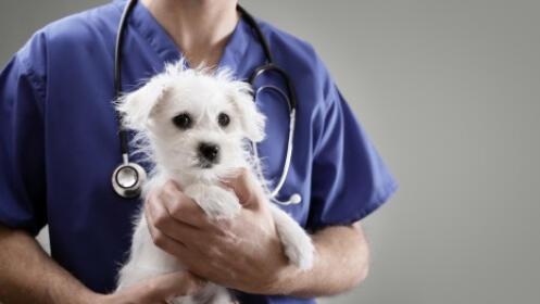 Revisión veterinaria, consulta dermatológica y bañoterapia de Ozono