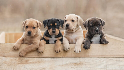 Revisión, desparasitación, 3 vacunas y microchip para tu cachorro