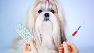 Revisión y vacunación contra Traqueobronquitis infecciosa canina