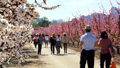 Floración de Cieza: ruta por los puntos más atractivos del campo ciezano