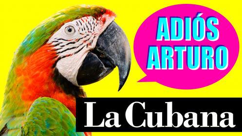 Dto: La Cubana vuelve a Murcia con su nuevo espectáculo: ¡adiós Arturo!