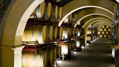 Creciendo con el vino en Bodegas Luzón