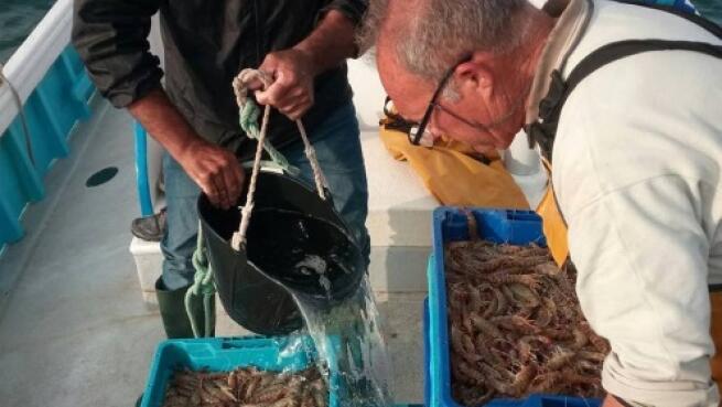 Campaña del langostino del Mar Menor: jornada con los pescadores