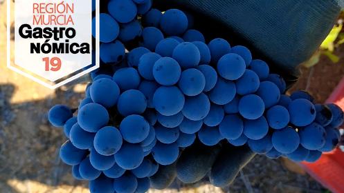 Taller: De la uva al vino paso a paso